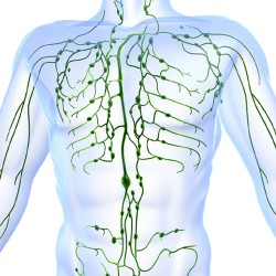 Advanced Lymphatic Drainage